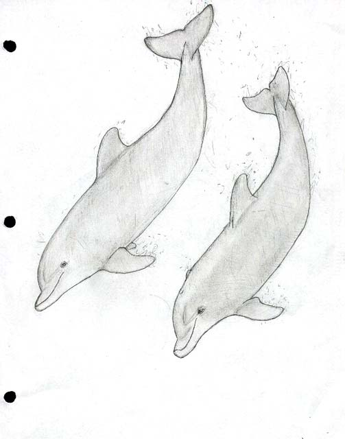 Dolphin Heart Drawing