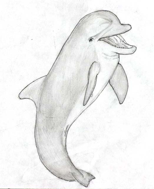 http://www.dolphinleap.com/sketches/DolphinMouthOpenSketch.jpg